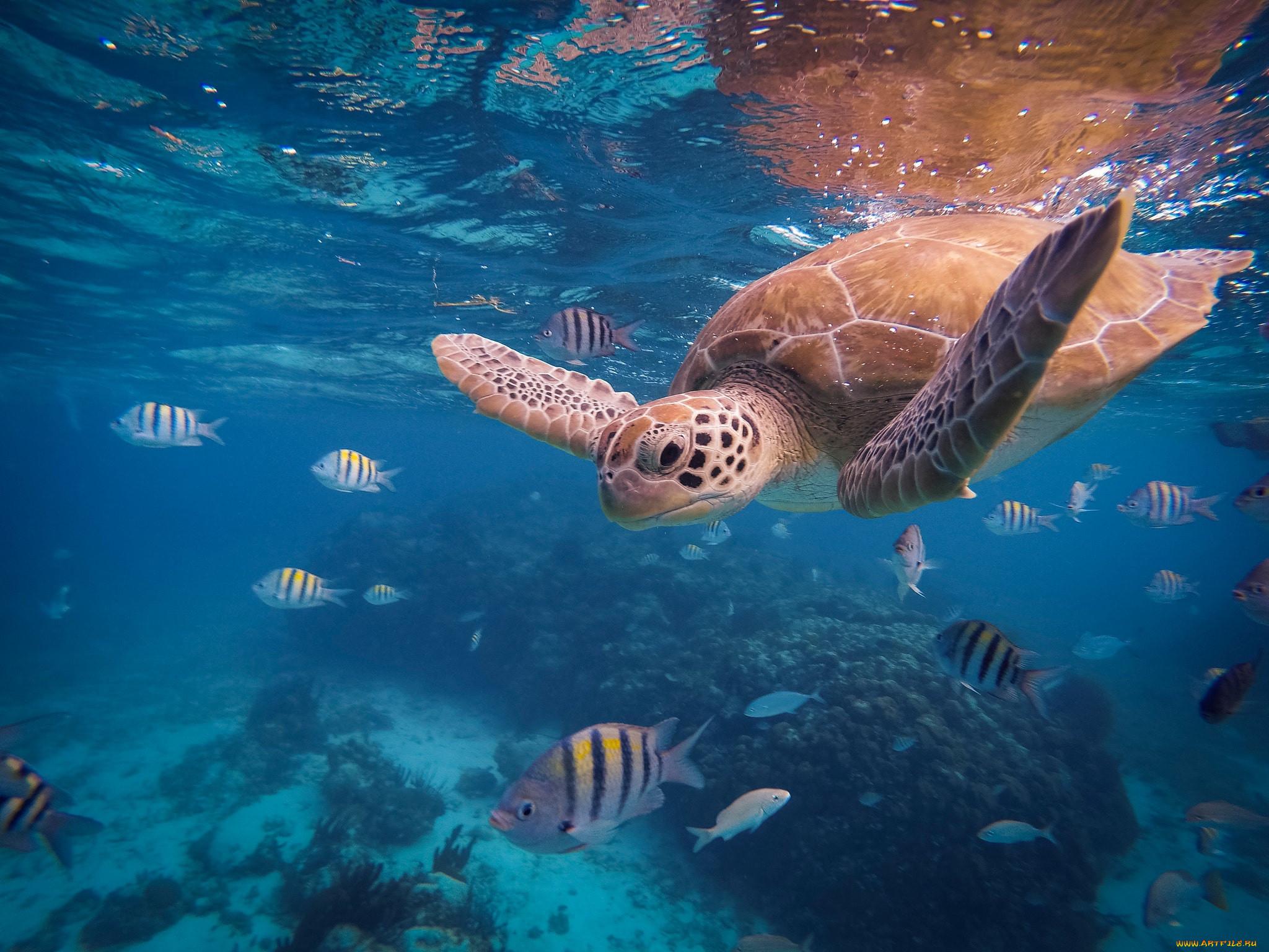Картинки животного мира морей и океанов
